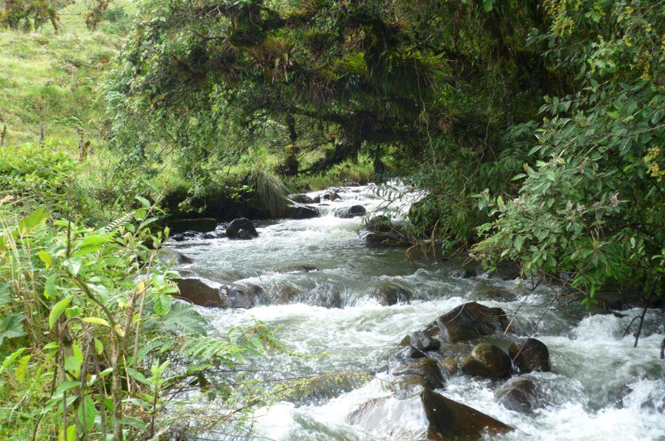 Diese Stelle des Flusses Irubí schützen ausladende Bäume vor Verdunstung