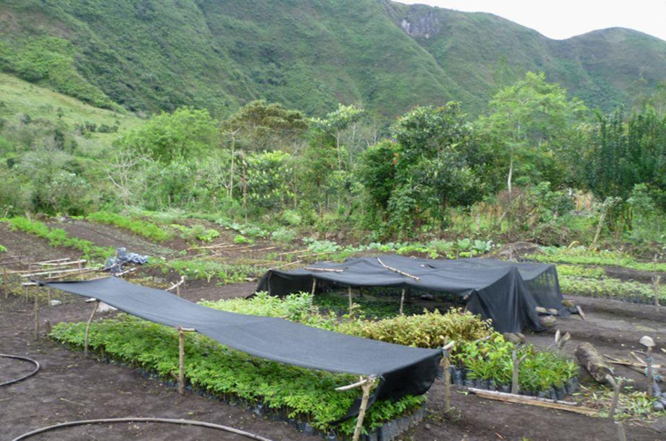 In der 2011/12 geschaffenen Baumschule Irubí gedeihen Setzlinge für die Aufforstungsarbeit