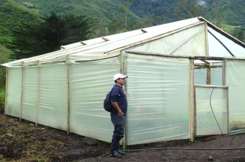 Das Gewächshaus schützt Setzlinge von Fruchtbäumen wie Avocado- und Zitrusbäume