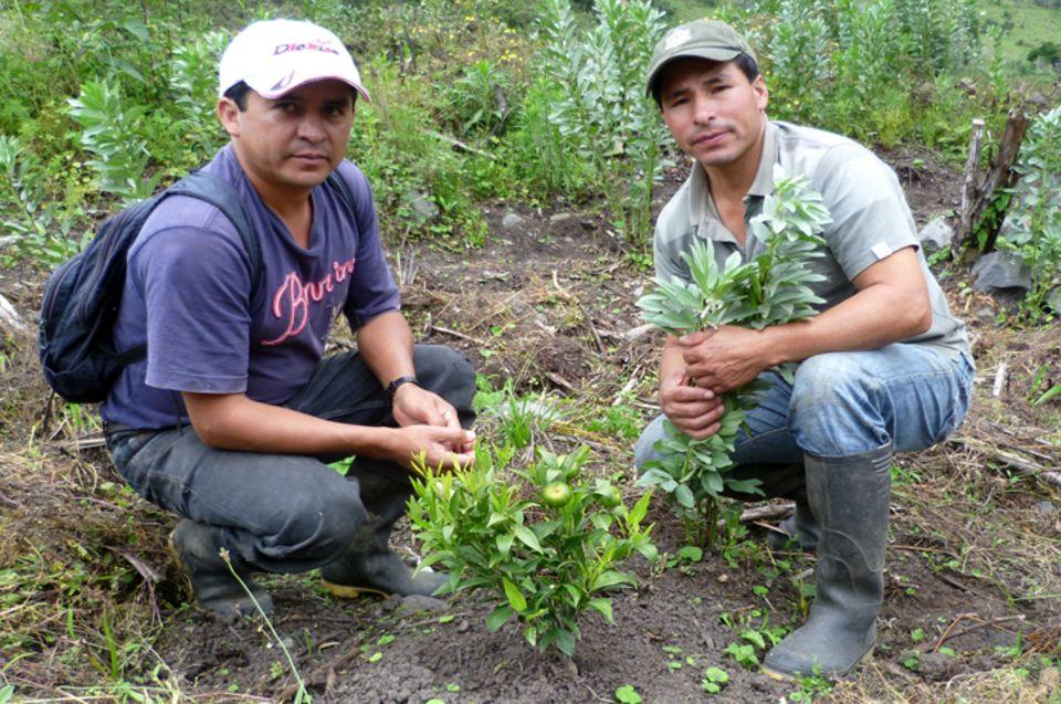 Projektbetreuer Milton Arcos (re.) und Armando Almeida mit Zitrus-Setzlingen im Mai 2012
