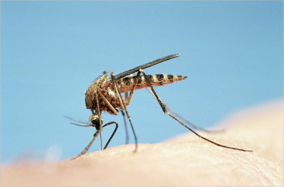 Mücken orientieren sich am menschlichen Körpergeruch. Wer den mit dem richtigen Mittel übertüncht, zählt am Ende weniger Stiche
