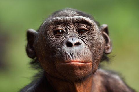 Tierethik: Menschenrechte für Affen!