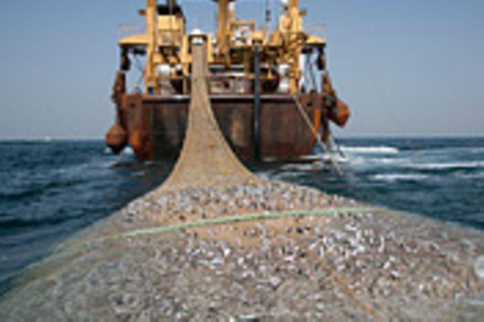 Fischerei: Fischzüge vor Afrika