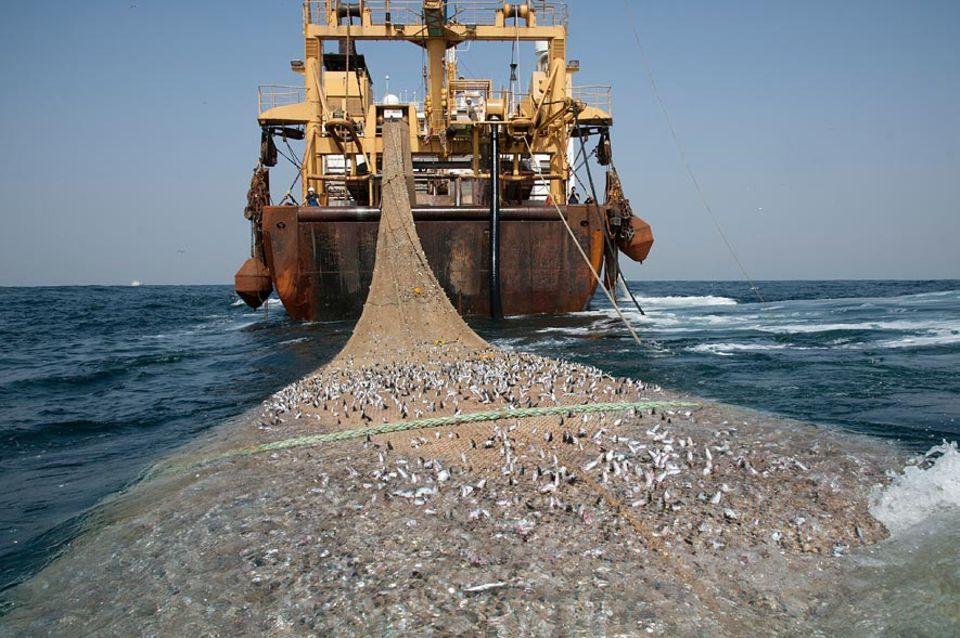 Fischerei: Supertrawler aus der EU fischen die Gewässer vor Westafrika leer - sagen Umweltorganisationen