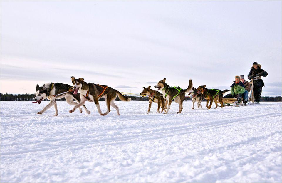 Lappland: Bis Aurora sich zeigt, fährt man in Lappland Hundeschlitten