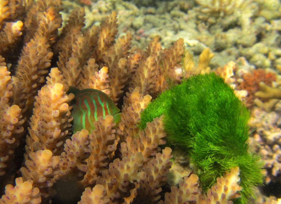Ökologie: Hier wird der Fisch zum Gärtner