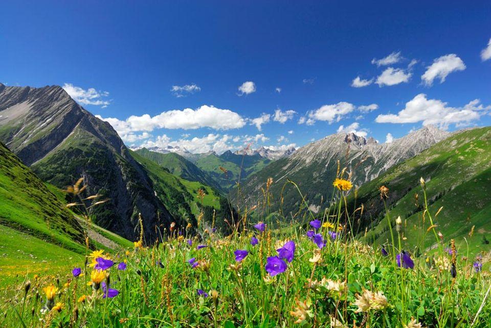 Bergregionen: Eine der wenigen noch gepflegten Bergwiesen mit Blick auf die Lechtaler und Allgäuer Alpen