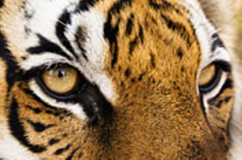 Schreibwettbewerb: Mit Tieraugen sehen