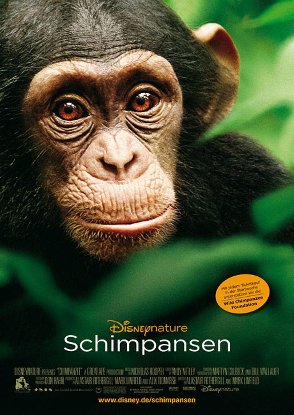 """Schimpansen: Zum Kinotipp """"Schimpansen"""": www.geolino.de/74758"""
