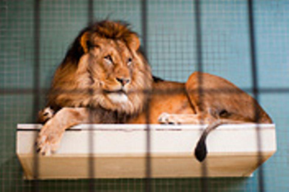 Wettbewerb: Schreibwettbewerb-Sieger: Mit Tieraugen sehen