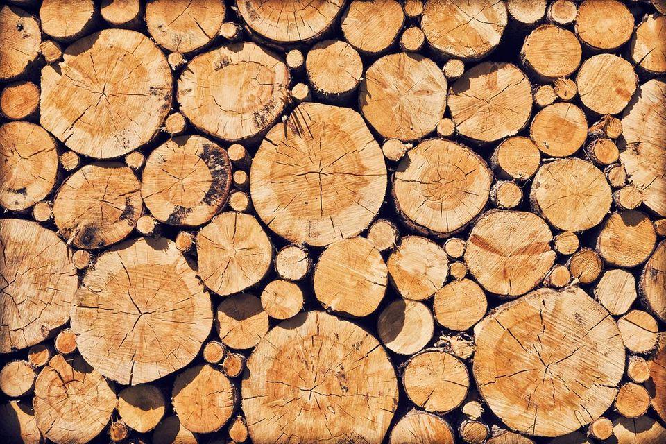 Windkraft: Wind aus Holz