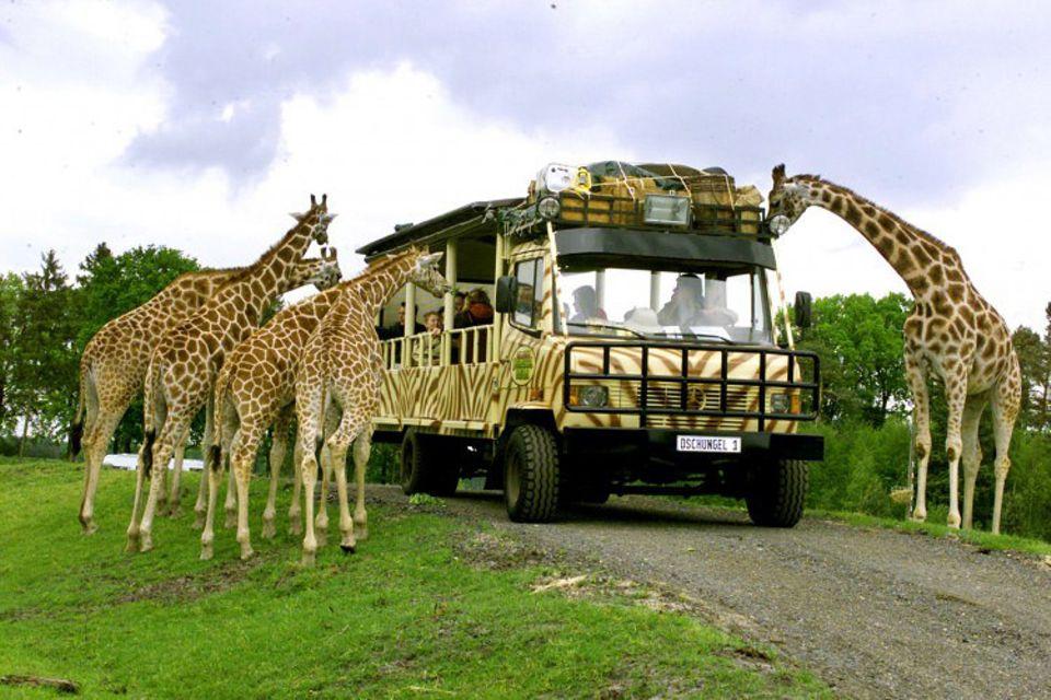 Freizeit: Hier sind Wildtiere, wie diese Giraffen, dem Besucher zum Greifen nah