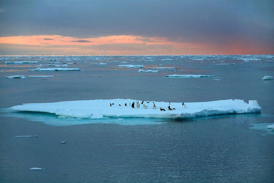 Interview: Die Antarktis ist eine der letzten unberührten Meeresregionen. Doch die Einrichtung der weltgrößten Schutzzone ist nun gescheitert