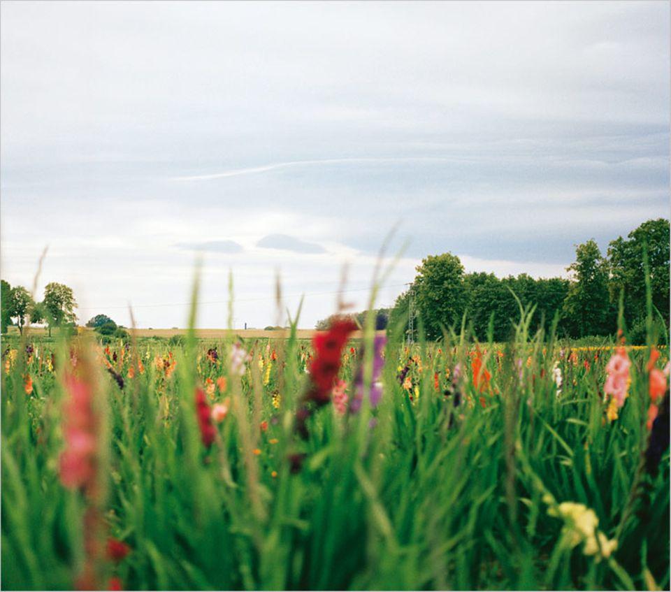 Mecklenburg-Vorpommern: Blumenwiese zum Ausspannen – im Hinterland von Mecklenburg kein Problem