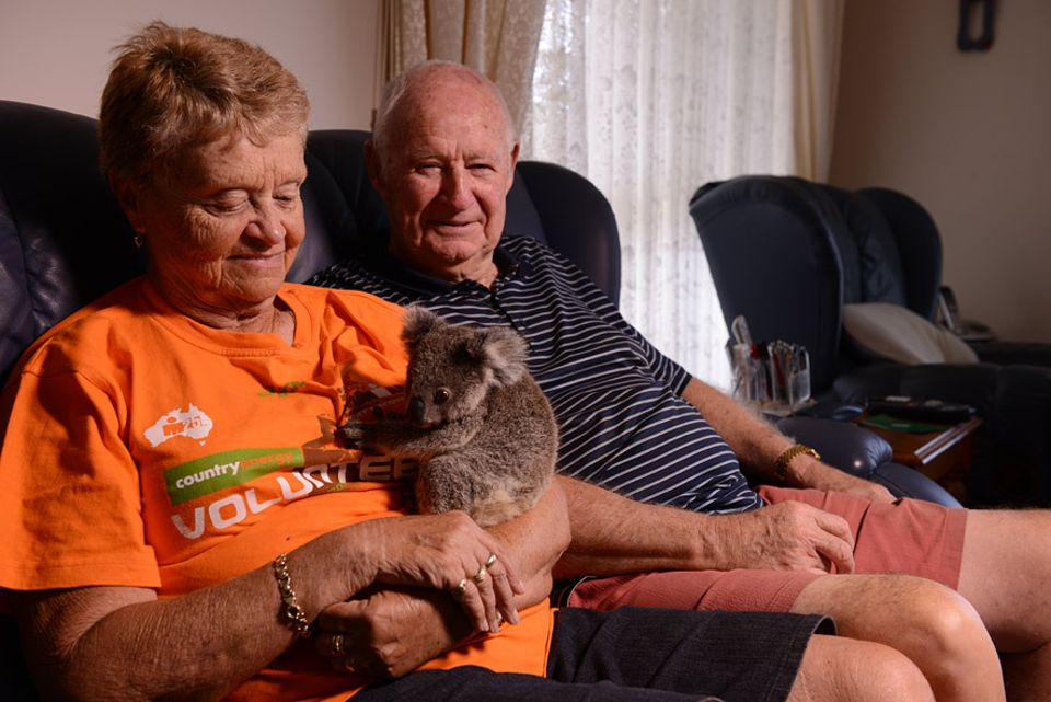 Waisen-Koala Neill ist das zwanzigste Pflegejunge von Barbara und Geoffrey Garrett. Er bekommt solange Milch zugefüttert bis er 2,5 Kilogramm hat und stark genug ist auf Eukalyptusbäume zu klettern