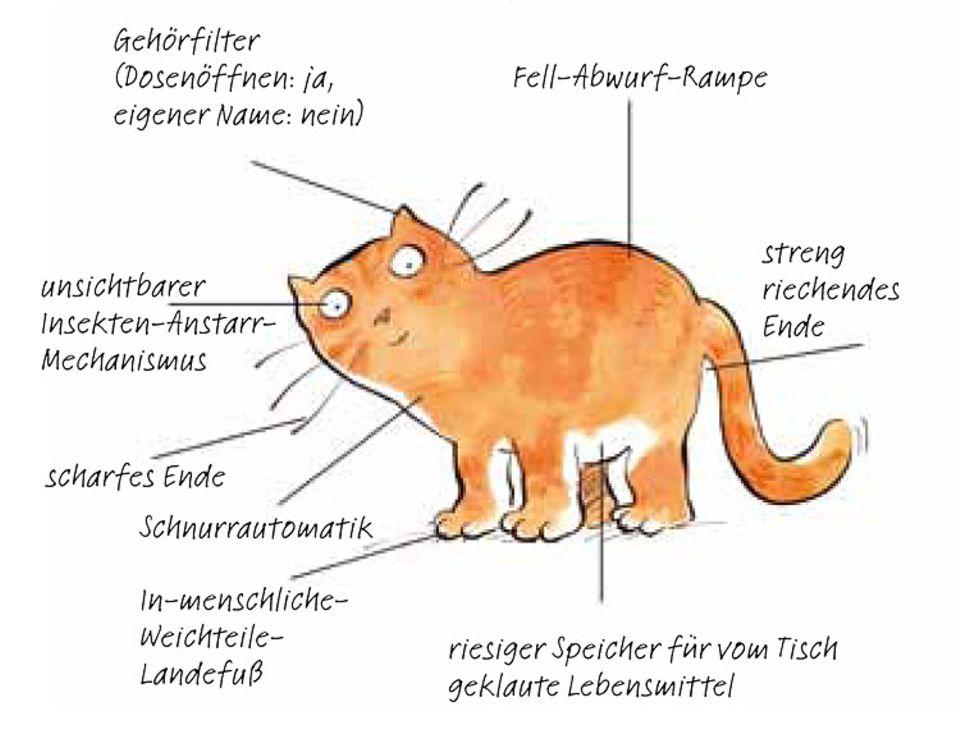 Die Katze, wie der Mensch sie kennt und liebt