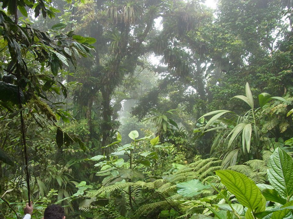 Botanik: Immer warm und sehr feucht: Der Regenwald