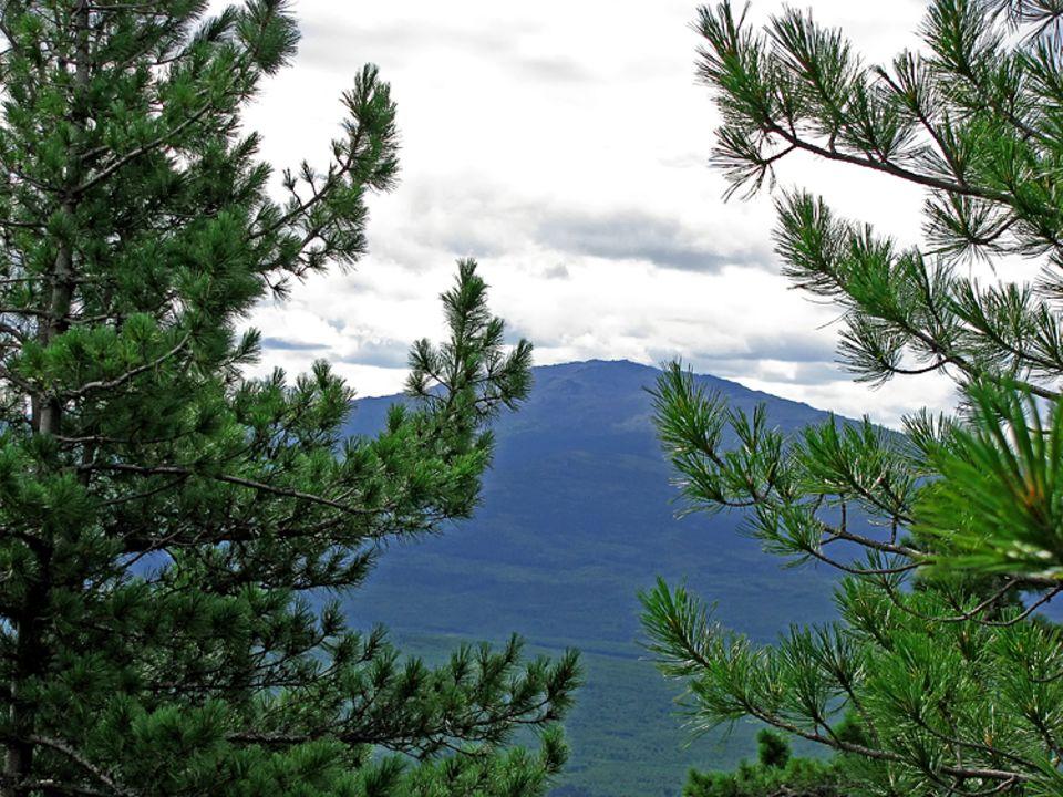 Botanik: Pinien und Zedern sind typische Baumwarten im Hartlaubwald