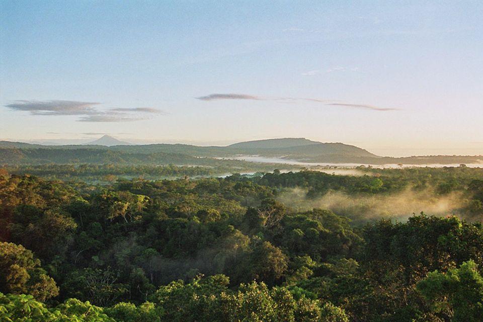 Botanik: Wunderschön üppig und grün: der regengrüne Wald