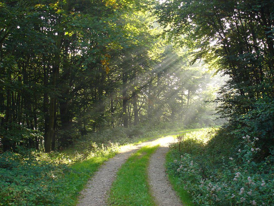 """Botanik: Der Name """"Mischwald"""" verrrät es bereits: bis zu zwanzig verschiedene Baumarten gibt es hier pro Hektar Waldfläche"""