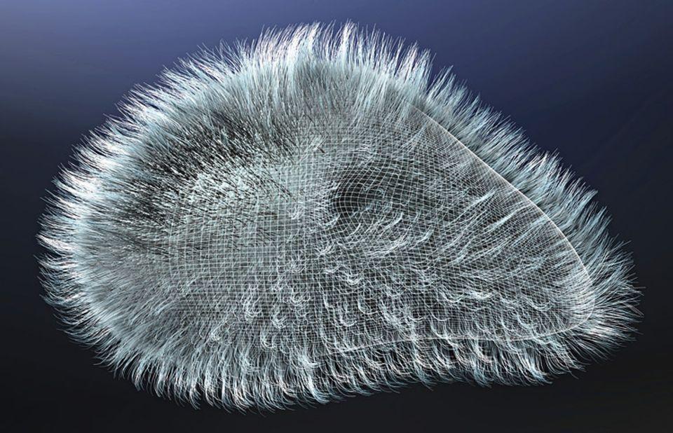 Evolution: FRÜHES SCHMECKEN: Schon vor zwei Milliarden Jahren können Einzeller (hier ein Pantoffeltierchen) Futterstoffe gezielt registrieren
