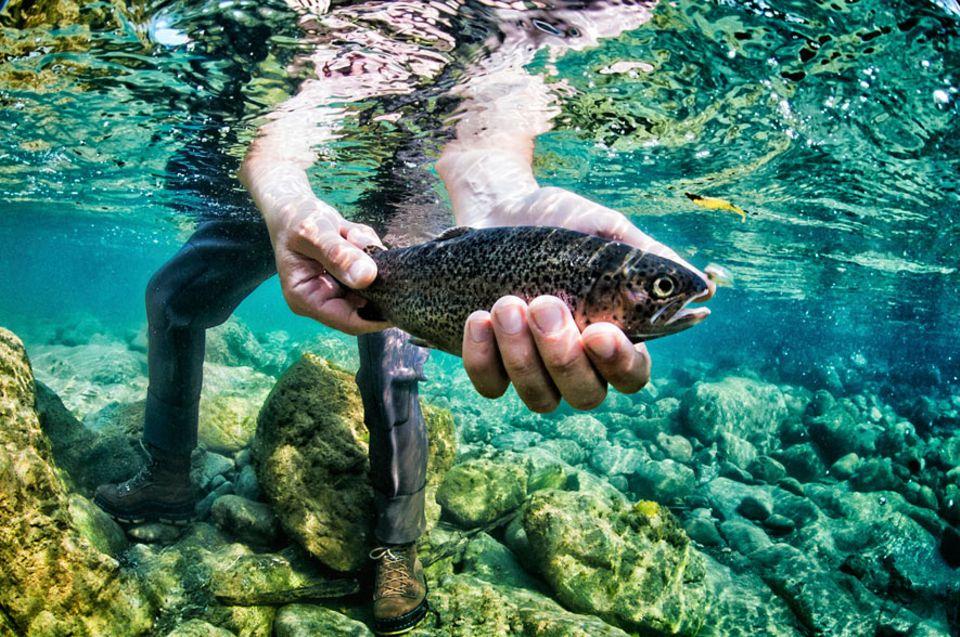 Studie: In guten Händen? Ob Fische Schmerzen empfinden, ist angeblich eine ungeklärte Frage