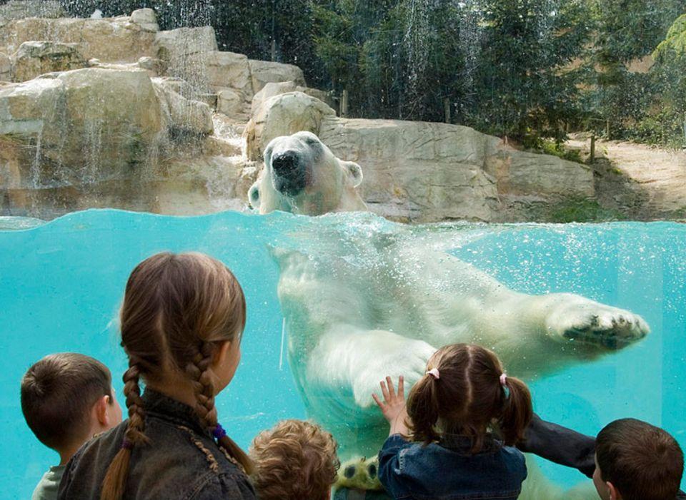 Diskussion: Sollen Tiere in Zoos gehalten werden? Sagt uns eure Meinung!
