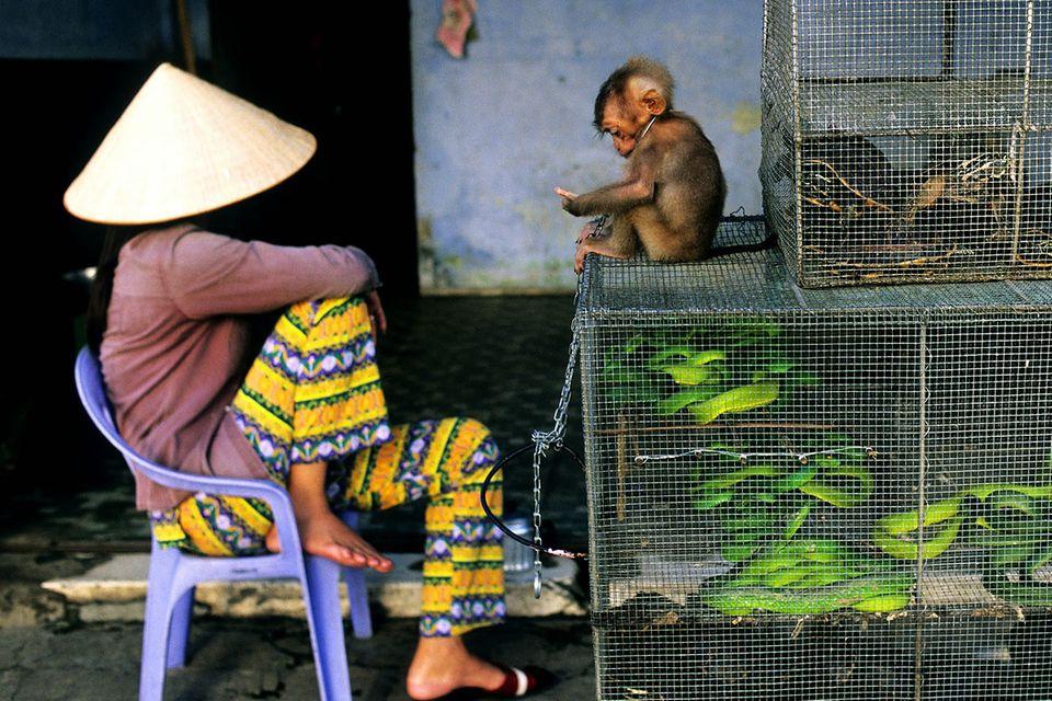 "Illegaler Tierhandel: ""Der Wald ist schon relativ leer"""