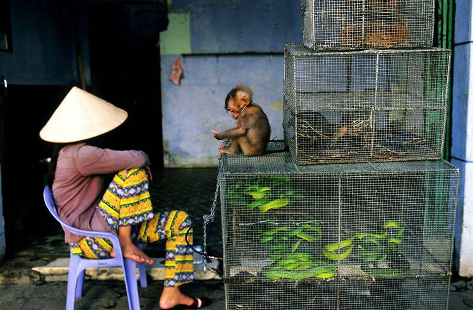 Illegaler Tierhandel: Kein ungewöhnlicher Anblick in den Gassen von Hanoi: Wildtiere, die zum Verkauf angeboten werden - als fragwürdige Delikatessen oder Medizin