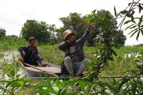 Kambodscha, Ratte süß-sauer