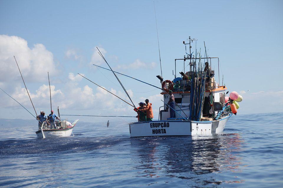 Fischerboote beim Thunfischfang auf den Azoren