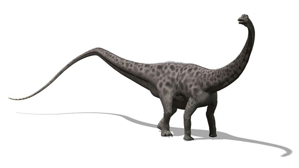 Tierlexikon: Nach dem Argentinosaurus ist der Diplodoctus eines der längsten Landtiere, die je gelebt haben