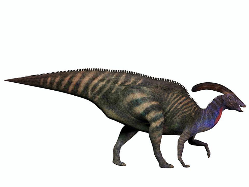 Tierlexikon: Bisher sind die Wissenschaftler ratlos über den Knochenzapfen des Parasaurolophus