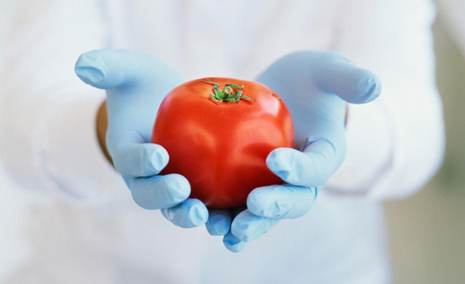 Ernährung: Mittels grüner Gentechnik können Wissenschaftler, unter anderem, einer Tomate ganz neue Eigenschaften geben
