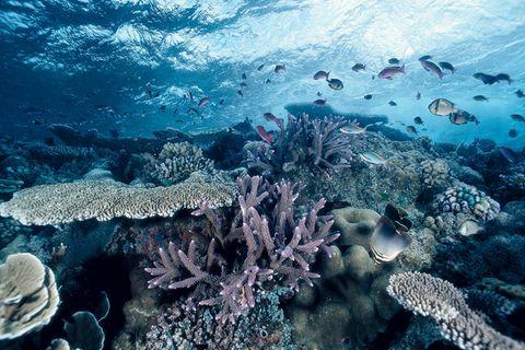 Korallen: Achtung, zerbrechlich!