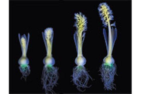 Pflanzen: Leseprobe: Was Pflanzen wissen