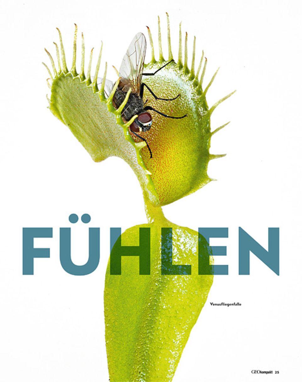 Pflanzen: Venusfliegenfalle