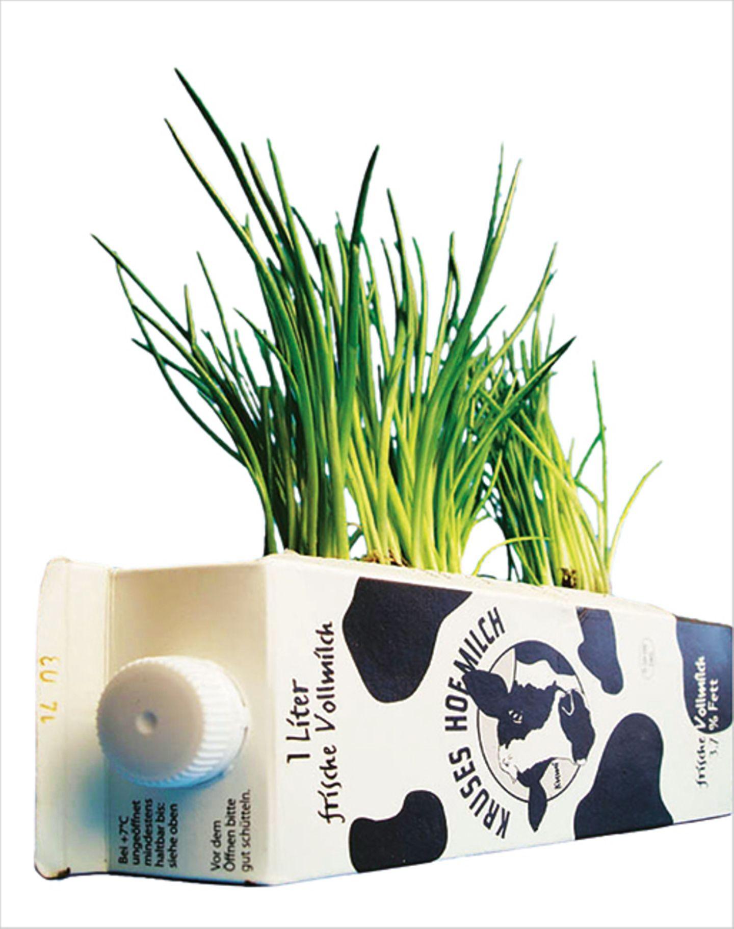 Basteln: So schnell und einfach könnt ihr Schnittlauch anpflanzen