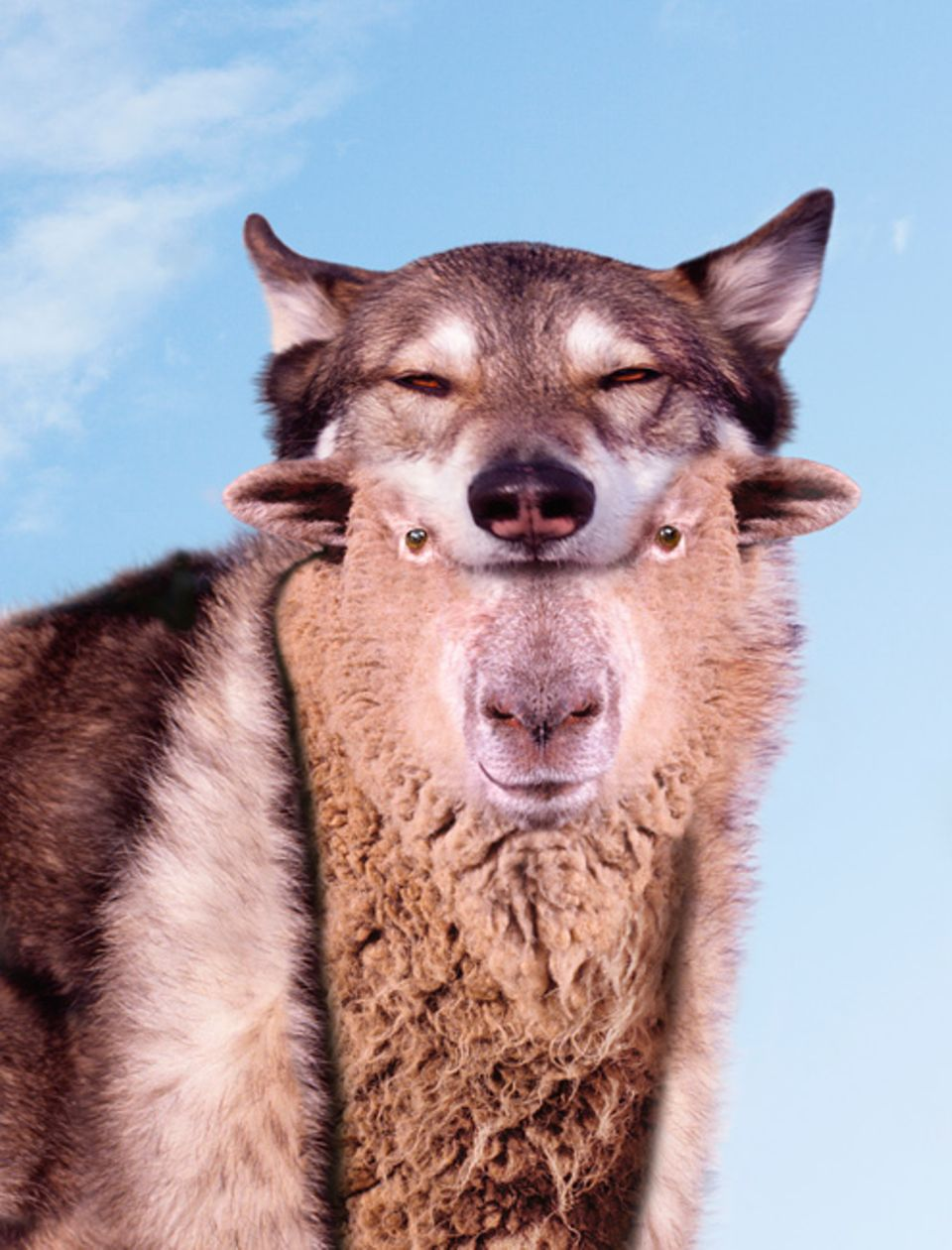 Redewendung: Es geht auch umgekehrt: Ein unschuldiges Schaf verkleidet sich als böser Wolf