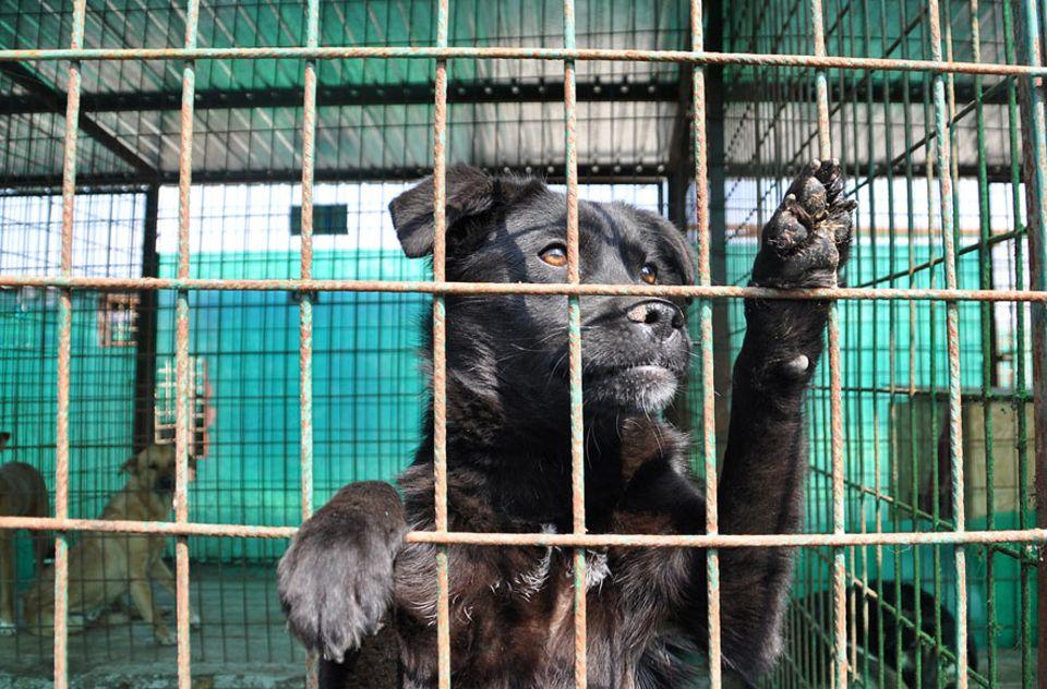 Rumänien: Die rumänischen Straßenhunde warten in den öffentlichen Tierheimen der Stadt auf die Erlösung. Das kann der Tod oder eine Adoption sein