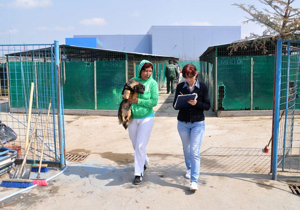 Rumänien: Tag für Tag schafft Petra Ciocan die Hunde aus dem öffentlichen Tierheim. Sie stehen auf der Liste und würden sonst getötet werden