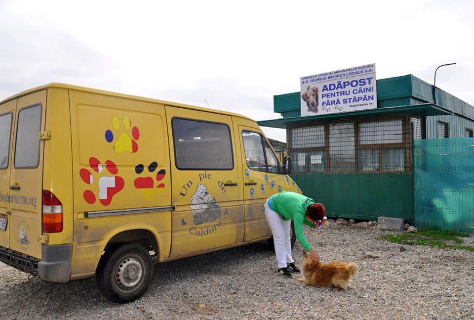 Rumänien: Auch vor den Toren des öffentlichen Tierheims in Giurgiu leben Streuner