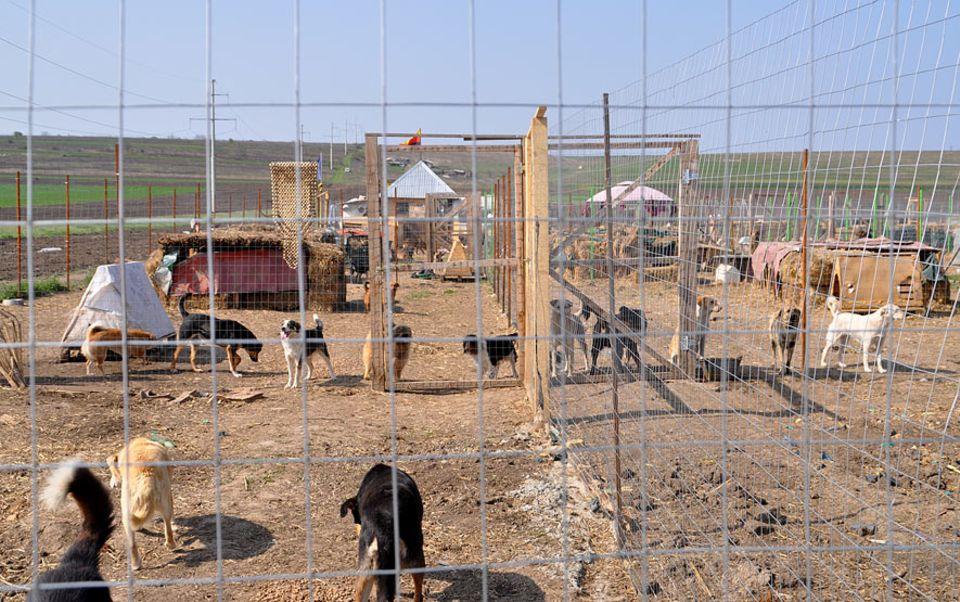 """Rumänien: Das """"Dogsland"""" hat eine Fläche von etwa 13.000 Quadratmetern. Hier kann Petra Ciocan die Hunde versorgen und vor dem Tod bewahren"""