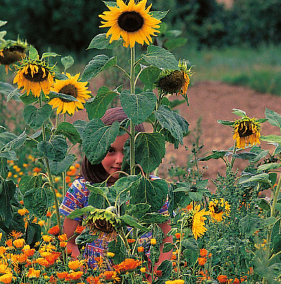 Durch regelmäßiges Gießen, Jäten und Hacken wachsen Mini-Pflanzen zu stattlicher Größe heran. Da kann man mächtig stolz sein!