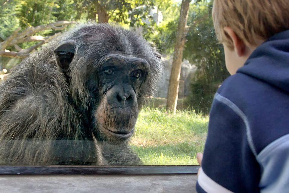 "Tierrechte: ""Inakzeptable Verhältnisse"""