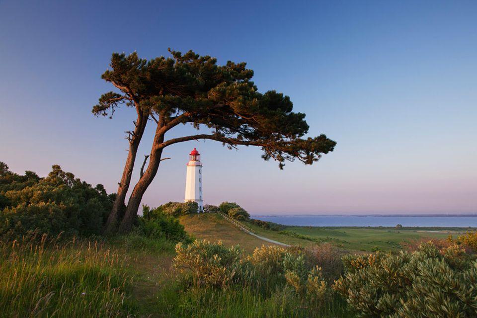 """Reisetipps: Der Leuchtturm steht auf dem 72 Meter hohen """"Dornbusch"""" und ist einer der Höhepunkte von Hiddensee"""