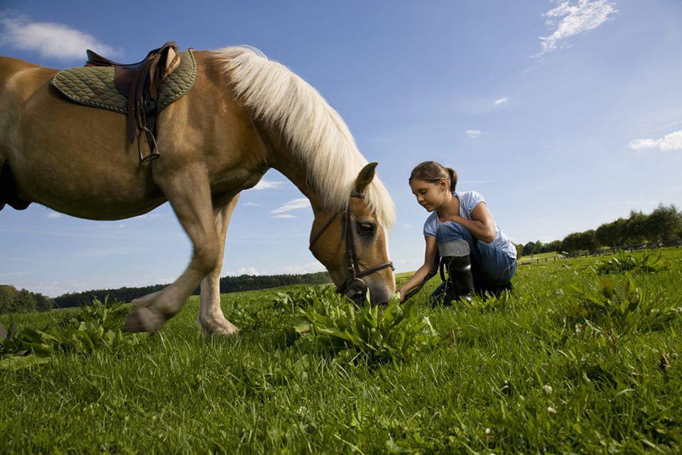 Reiseideen: Ich will ein Pony! Dieser Wunsch ist nicht leicht zu erfüllen, doch auf diesen Ferienreiterhöfen wird der große Traum vom eigenen Pferd zumindest für ein paar Wochen Wirklichkeit