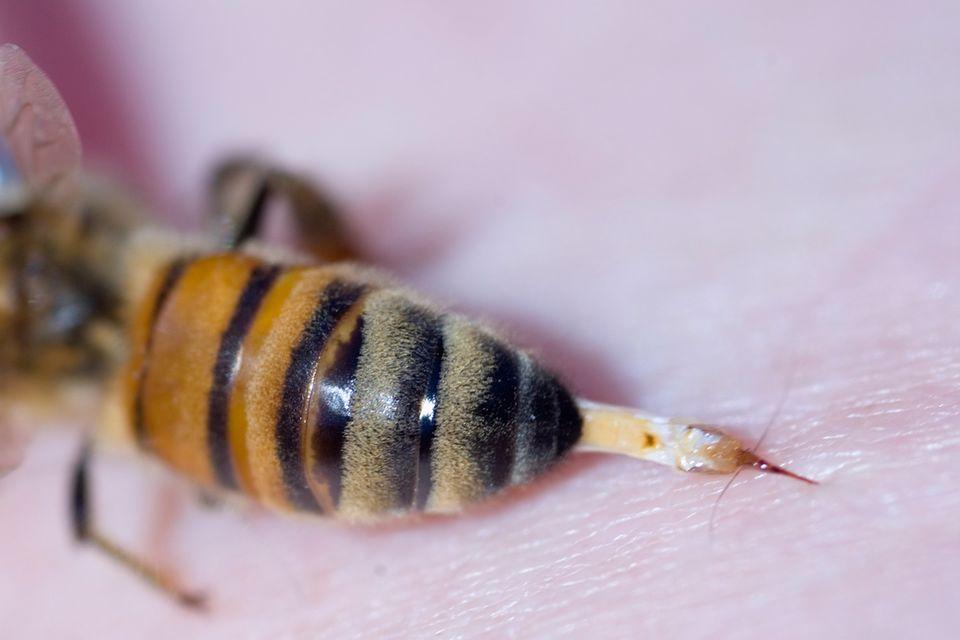 Bienen: Bestechende Erkenntnis