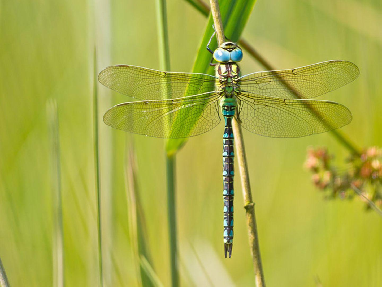 Tierlexikon: Eine Libelle habt ihr bestimmt schon einmal in eurem Garten gesehen