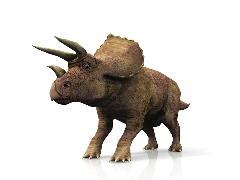 Tierlexikon: Der Triceratops war dem Nashorn, das wir heute kennen, sehr ähnlich